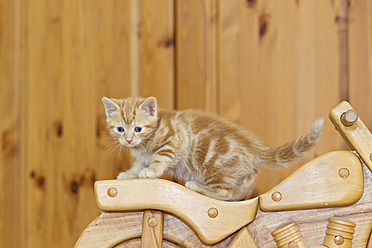 Germany, Kitten on wooden motorcycle, close up - FOF003642
