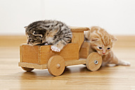 Germany, Kittens sitting on wooden toy, close up - FOF003654