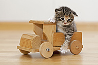 Germany, Kitten sitting on wooden toy, close up - FOF003656