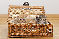 Germany, Kittens in box, close up - FOF003657
