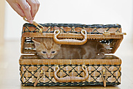 Germany, Human hand holding hook with Kitten in box, close up - FOF003674