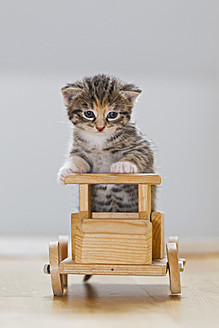 Germany, Kitten sitting on wooden toy, close up - FOF003666