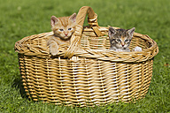 Germany, kittens sitting in basket, close up - FOF003676