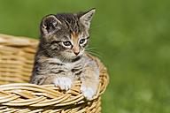 Germany, kitten sitting in basket, close up - FOF003677