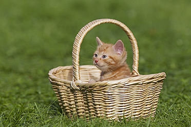 Germany, kitten sitting in basket, close up - FOF003679