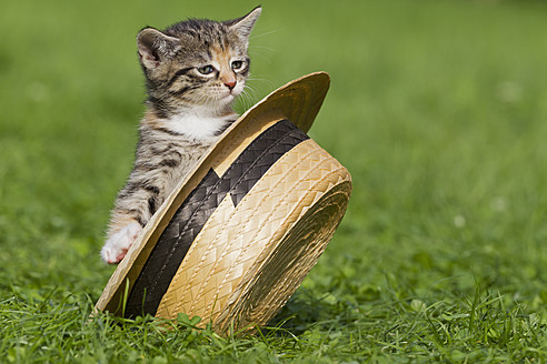 Germany, Kitten sitting in hat, close up - FOF003680