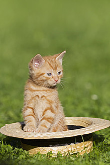 Germany, Kitten sitting in hat, close up - FOF003683