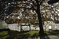 Germany, Upper Bavaria, Weidenkam, View of greenhouse - TCF002068