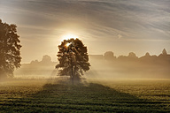 Germany, Bavaria, Upper Bavaria, Rupertiwinkel region, Abtsdorf, View of tree in morning with sunlight - SIEF002013