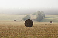 Germany, View of bale of straw in a autumn - MSF002543