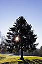 Germany, Bavaria, View of fir tree with sun - FOF003845