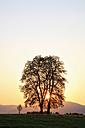 Germany, Bavaria, View of broad leaved tree at sunrise - FOF003852