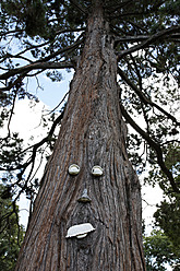 USA, Pine tree trunk with face - ANBF000028