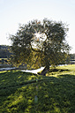 Germany, View of River Ruhr with tree - ANBF000144