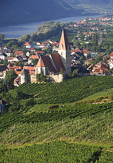 Austria, Wachau, Weissenkirchen, View of Wehrkirche Church and vineyard - WWF001919