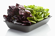 Green and red salad leaf in tray on white background - MAEF004416