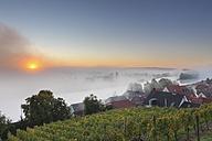 Germany, Bavaria, Wipfeld, View of village and vineyard - SIEF002387