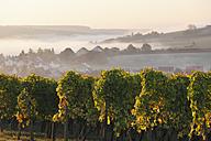 Germany, Bavaria, Wipfeld, View of village and vineyard - SIEF002386