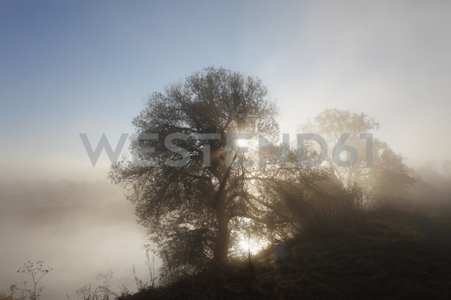 Germany, Bavaria, Wipfeld, View of willow tree in fog near Main river - SIEF002383