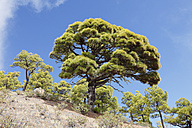 Spain, Canary Islands, La Palma, View of Caldera de Taburiente National Park - SIEF002432