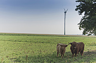Germany, Saxony, Highland cattle on grass with wind turbine in background - MJF000004