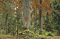 Germany, Heart shaped carved on tree trunk - AXF000016