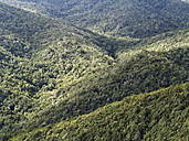 Spain, La Gomera, View of laurel forest at Garajonay National Park - SIEF002571