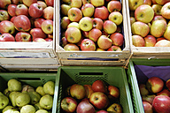 Germany, Bavaria, Apples and pears at organic food shop - TCF002509