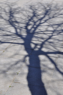 Germany, Bavaria, Shadow of tree - AXF000056