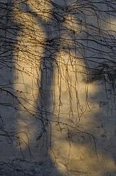Germany, Frankfurt, Tree shadow on wall - MUF001195