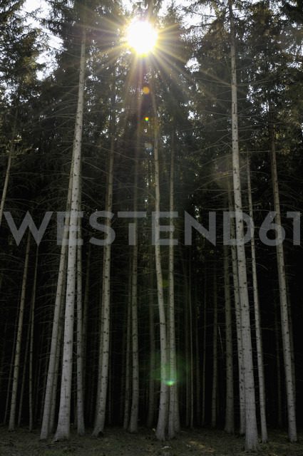 Germany, Bavaria, View of forest - AXF000078