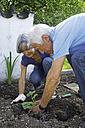 Germany, Bavaria, Senior couple gardening plants - TCF002617