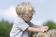 Germany, Bavaria, Boy exploring tree trunk, close up - TCF002760