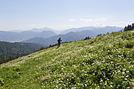 Germany, Bavaria, Person hiking on Gindelalmschneid Mountain, aconite leaved buttercup in foreground - SIEF002693