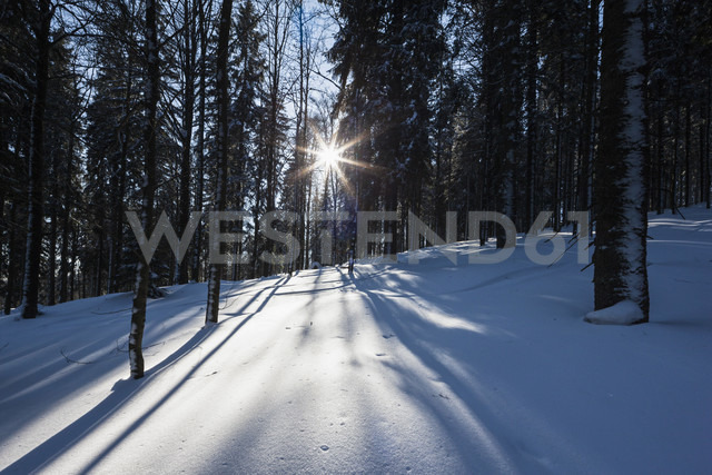 Germany, Bavaria, View of snow covered trees at Bavarian forest - FOF003896