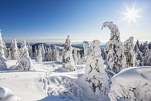 Germany, Bavaria, View of snow covered trees at Bavarian Forest - FOF003901