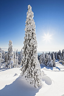 Germany, Bavaria, View of snow covered trees at Bavarian Forest - FOF003904