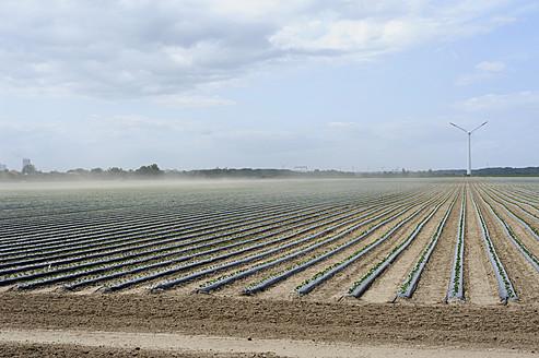 Germany, Mecklenburg-Western Pomerania, View of strawberry field, windpower in background - MJF000042