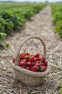 Germany, Saxony, Basket of strawberries in field, close up - MJF000044