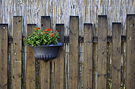 Germany, Hanging flowerpot on wooden fence, close up - AXF000112
