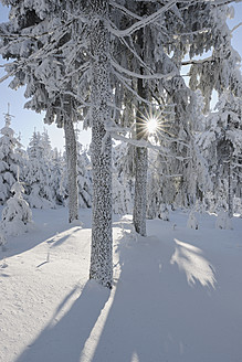 Germany, Saxony, View of snow covered trees in forest with sunbeam - RUEF000896