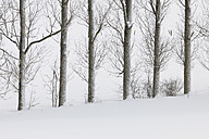 Germany, Hesse, View of snow covered trees at Rhoen Mountains - RUEF000906