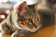 Close up of cat - ABAF000111