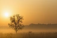 India, Uttarakhand, View of Mystic morning at Jim Corbett National Park - FOF004066