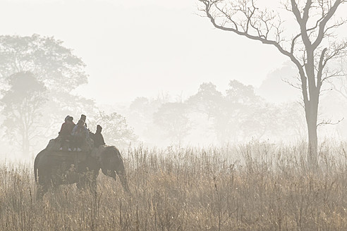 India, Uttarakhand, Mahout with tourists at Jim Corbett National Park - FO004068