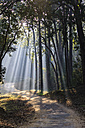 India, Uttarakhand, View of forest with shala trees at Jim Corbett National Park - FOF004069