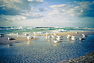 Germany, Mecklenburg Western Pomerania, Seagulls perching at Baltic Sea - MJF000103