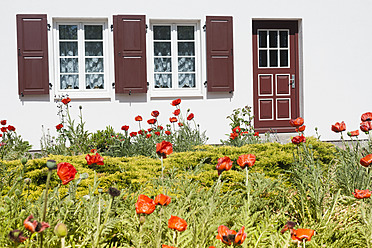Germany, Mecklenburg Western Pomerania, Red poppy flowers in front of house - MJ000114