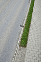 Germany, Bavaria, Grass between street and pavement - AXF000216
