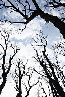 Spain, Burnt trees against sky - JMF000200